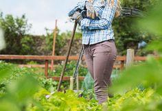 Guide pour réussir son #potager #jardinage