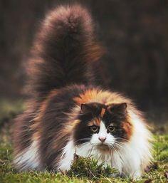 19 dos gatos mais caros de qualquer lugar do mundo                                                                                                                                                                                 Mais