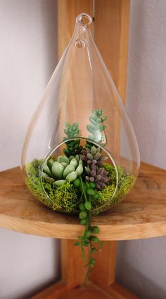 Artificial Succulent in a 5 Hanging Glass Vase by Aloha4649