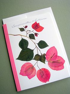 Pressed Flowers!!!   Pink Bougainvillea flowers, branch, green leaves, greeting card, no. 1033