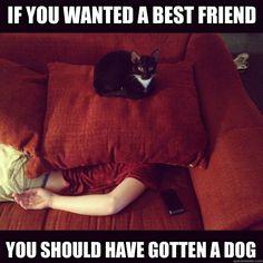 Wenn du einen besten Freund willst, brauchst du einen Hund