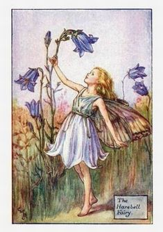 Harebell Flower Fairy Vintage Print by Cicely Mary Barker. first published in London by Blackie, 1925 in Flower Fairies of the Summer.
