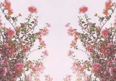 Cherry Blossoms - lace and cake