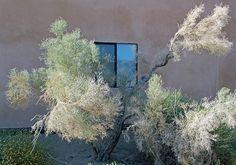 Santa Rosa National Monument  Palm Desert, California