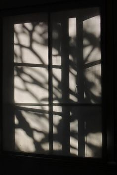 Black And White Photograph - Blind Shadows by Denise Clark Window Shadow, Sun Shadow, Shadow Play, Girl Shadow, Black Shadow, Aesthetic Pastel Wallpaper, Aesthetic Backgrounds, Aesthetic Wallpapers, Projector Photography