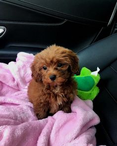 Find out additional info on cute dogs. Have a look at our website. Cute Little Puppies, Cute Little Animals, Cute Dogs And Puppies, Cute Babies, I Love Dogs, Doggies, Cavapoo Puppies, Goldendoodle, Puppys