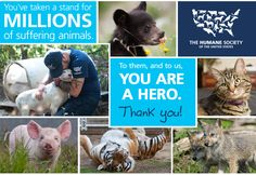 Check out this interactive #infographic from The Humane Society of the United States to see the amazing things accomplished for animals this year!