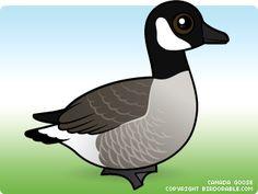 Birds seen at Martin Mere on Pinterest | Cute Cartoon ...