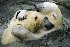 Russia_Novosibirsk_Zoo_Новосибирск_Зоопарк_09