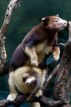 Rare+Animals | Animal Life » rare_animals_animal_life_ru_18