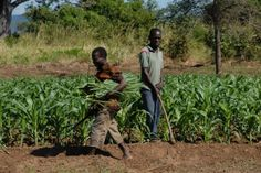Advocating strategies for agricultural transformation: FAO and AfDB