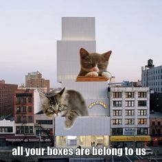 The Invasion of Architectural LOLCats | DesignDaily
