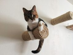 These wall posts to add some ~verticality~ for your active cat. | 25 Insanely Affordable Products Every Cat Owner Will Want