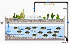 How to Build A Aquaponic Garden - Aquaponics 4 You Review