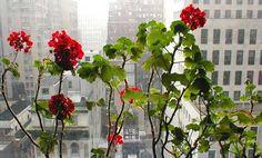 Mejora la calidad de tu oficina con plantas