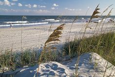 A strong breeze moves the sea oats.