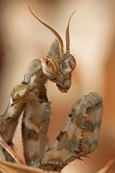 Not an alien species