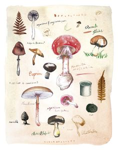 Mushrooms Poster by Lucille Prache