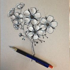 Practicing drawing Cherry Blossoms. Trying to learn the motifs of Japanese Tattooing. Pencil & Ink.