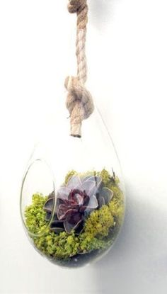 Knot so fast Hanging Terrarium