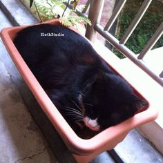 ":""Let's plant a cat on CNY lol...""  www.facebook.com/SlothStudio"