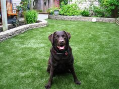Artificial Pet Turf Installation in Toronto You and your pets will fall in love with our artificial turf. No harmful pesticides, allergen free, will never be muddy or messy and less annoying odors thanks to our innovative products. Not to mention no more brown stains or holes in your lawn!