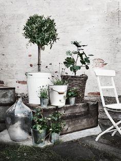 Olivträd OLEA EUROPAEA, fikon, lavendel LAVANDULA, chokladblomma och smultron växer i KNODD tunna och SOCKER krukor. Frida Eklund Edman, Fridasfina, för Livet Hemma