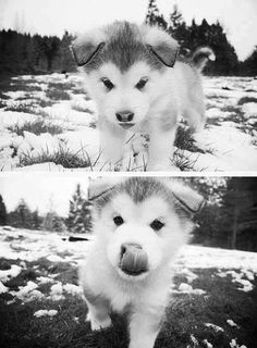 Adorable puppy!!!!! I love ! I must have him lol