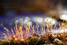 magic is everywhere by Isabella  (veredit) Kramer on 500px