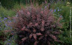 Plantengids - Tuincentrum Osdorp - Voor al uw tuinartikelen en aanverwante