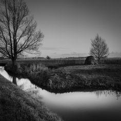 De Peppels Photo Blog | sloot met riet | reed and water blavk and white