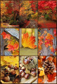 Autumn Crafts, Natural World, Earthy, Vibrant Colors, Pumpkin, Seasons, Fall, Photography, Mood Boards