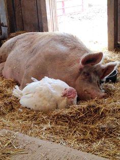 turkey and piggy best friends