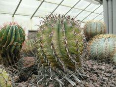 #cactus #ortobotanico #green #rare