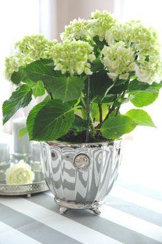 Jeśli wiosna to kwiaty, a jeśli kwiaty to tylko w pięknych dekoracyjnych osłonkach, jak np. osłonka Notilde Silver L, dostępna w naszym sklepie: http://www.hamptons.pl/produkty/oslonka-na-doniczke-notilde-silver-l/3811/