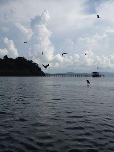 Feeding the eagle.. Langkawi Island