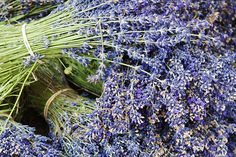 Lavender Bundles for Sale in Roussillon, Sault, Provence, France Photographic Print Romantic Flowers, Provence France, Cool Posters, Botanical Art, Daffodils, Bloom, Herbs, Pure Products, Plants