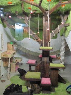 Paradise cat tree