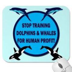 Stop Sea World Captiviy   Pin it 1 Like Image