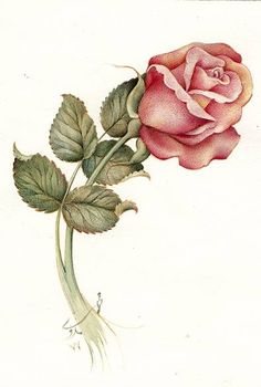 The Rose bud; 1998; watercolor & gauache on paper; belonging to Mrs. Samadi by Reza Mahdavi