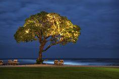 Tree at the Four Seasons Hualalai Kona--Honeymooned here!
