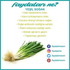 Yeşil Soğan  faydaları nelerdir #soğan #tazesoğan #yeşilsoğan Fast Weight Loss, Healthy Weight Loss, Onion Benefits, Health And Wellness, Health Tips, Hair Removal Remedies, Diet And Nutrition, Health Remedies, Fruit