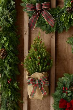 Fresh Dwarf Alberta Spruce Mini Christmas Tree | Lands' End