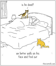 """theycantalk: """"concerned cats. They Can Talk is on Facebook ! """""""