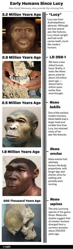 Early Humans Since Lucy - (V)