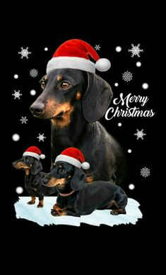 Dachshund Art, Dachshund Gifts, Dachshund Puppies, Weenie Dogs, Daschund, Christmas Animals, Christmas Dog, Merry Christmas, I Love Dogs