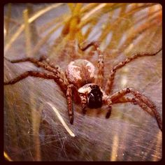 Wolf spider in Spiders Alive!   Photo by terrytombrown via Instagram