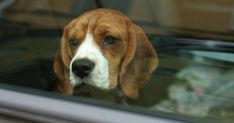 5 Dog Car Safety Mistakes To Avoid
