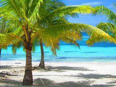 Isla Saona Dominican Republic(Saona island )