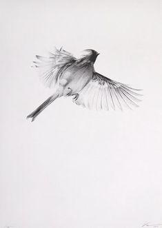 white light flight Possible bird tattoo style // gillar vingarnas skirhet Future Tattoos, New Tattoos, Tatoos, Dr Tattoo, Rabe Tattoo, Omg Posters, Vogel Tattoo, Sparrow Tattoo, Light Tattoo